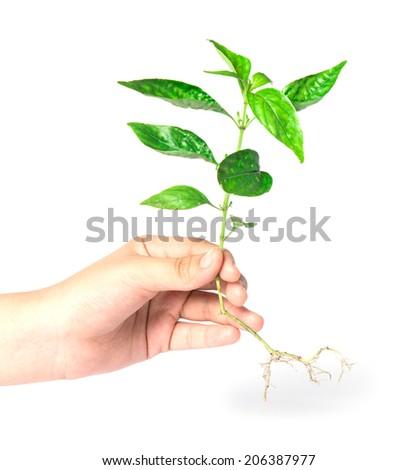 Tree in hands  - stock photo
