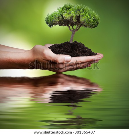 tree in hands with reflection in water - stock photo