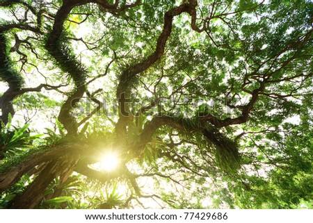 tree in jungle - stock photo
