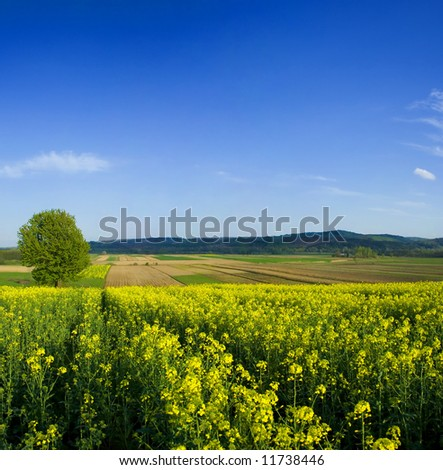 Tree in oilseed rapeseed field during spring - stock photo