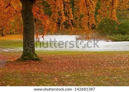 Tree in park in autumn - stock photo