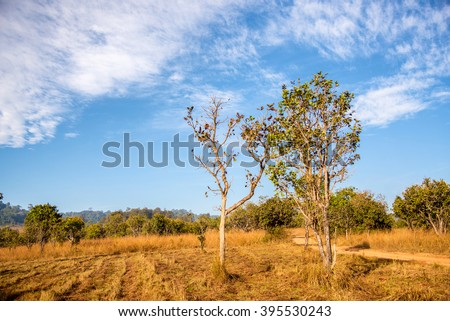tree in rural field dry meadow - stock photo
