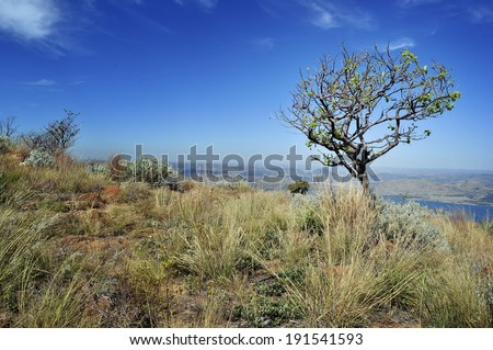Tree in the African grassland overlooking distant landscape - stock photo
