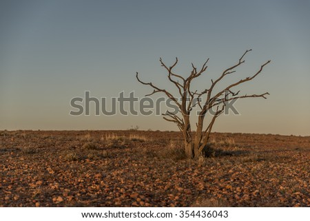 Tree in the Australian Outback - stock photo