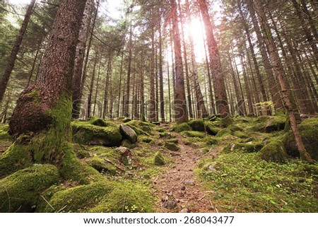tree in the forest - stock photo