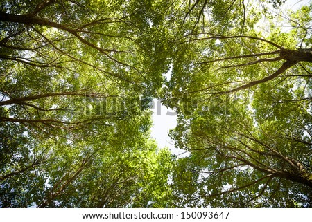 tree in the forest, looking up - stock photo