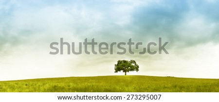 tree in the meadow, panorama format - stock photo