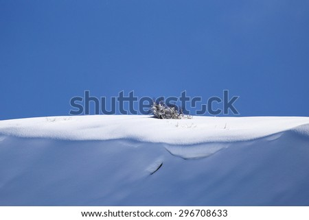 tree in the snow against the blue sky - stock photo