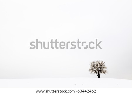Tree in the snow in a field in winter - stock photo