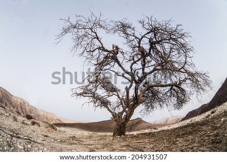tree in Unique park Timna  taken in Israel - stock photo