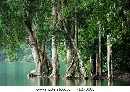tree in water at forest - stock photo