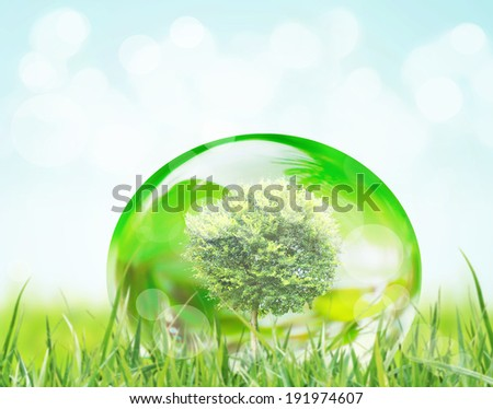 tree in water drop on leaves  - stock photo