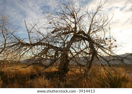 Tree in White Sands - stock photo