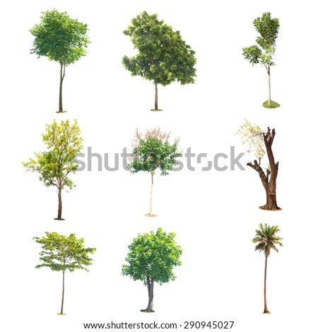 tree isolated colection , element for design and garden - stock photo