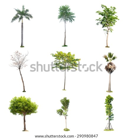tree isolated colection , element for design garden and decoration - stock photo