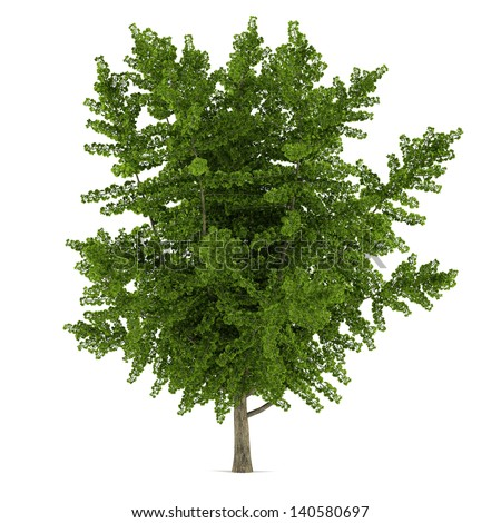 Tree isolated. Ginkgo biloba - stock photo