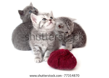 Tree kitten with wool for knitting - stock photo