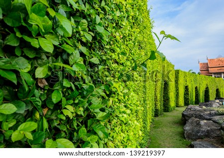 Tree labyrinth in the garden, Thailand - stock photo