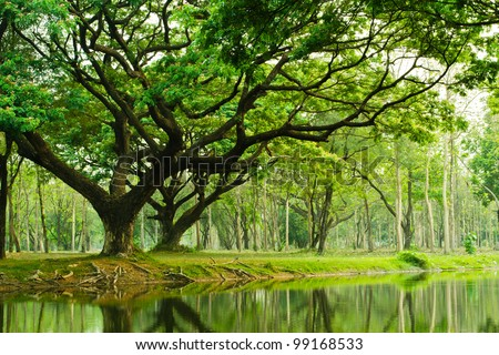 Tree lawn green areas in the park. Holiday. - stock photo