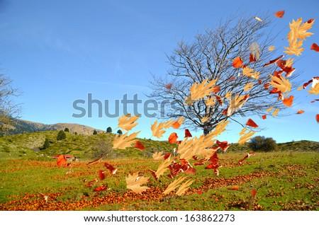 tree leaves air wind autumn wind - stock photo