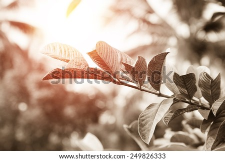 tree leaves  sun flare. vintage effect. - stock photo