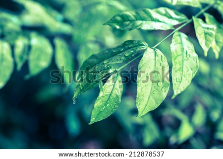 tree leaves with water drops with retro filter - stock photo