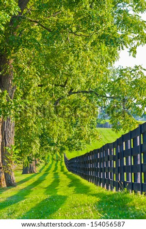 Tree line and fence at horse farm. - stock photo