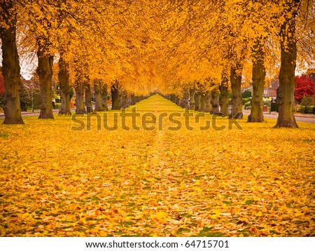 Tree lined avenue in autumn fall with leaves covering the ground. - stock photo