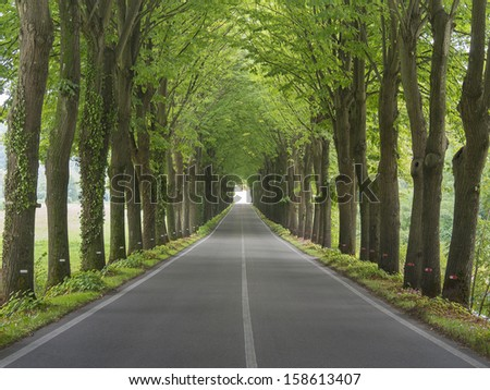 Tree lined country road  - stock photo