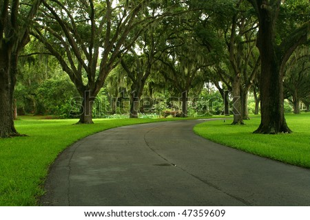 Tree lined Tropical Road in Madeira Beach Florida. - stock photo