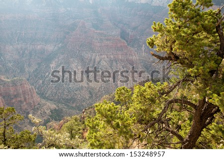 tree lit by the first sun of the day at Grand Canyon, North Rim,  at sunrise in National Park, Arizona, USA - stock photo
