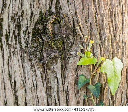 tree, nature, spring, big, outdoor - stock photo