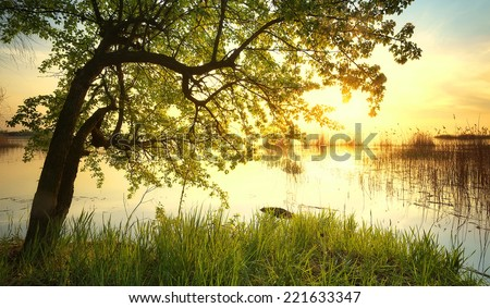 Tree near lake during sunset. Beautiful natural landscape - stock photo