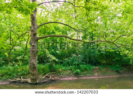 Tree near water stream in green forest. - stock photo