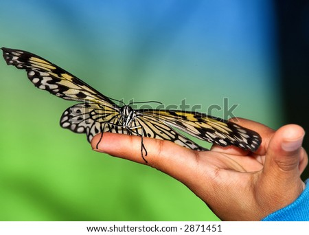 Tree Nymph Butterfly on hand - stock photo