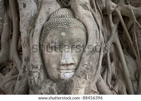 Tree of buddha and buddha head - stock photo