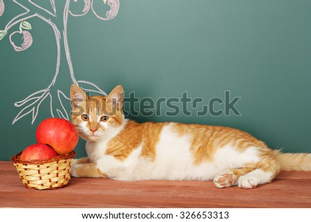 Tree of knowledge education concept with Scientific Cat - stock photo