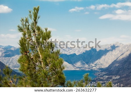 Tree on a background of mountains - stock photo