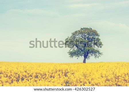 Tree on a rapeseed field in the summer - stock photo