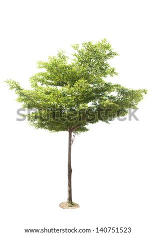 Tree on a white background. - stock photo