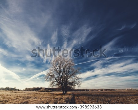 Tree on field and beautiful cirrus clouds on blue sky. Landscape.  - stock photo