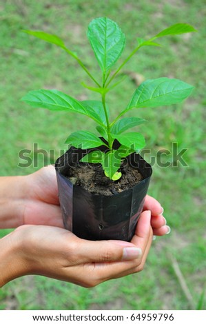 Tree on hand - stock photo