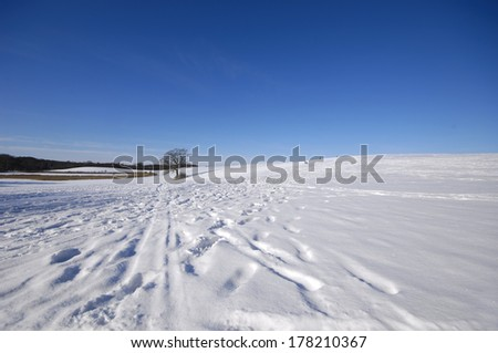 Tree on hill at winter. The ground is coverd with snow. - stock photo