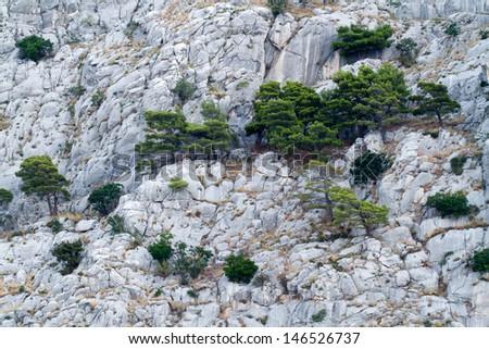tree on mountain wall - stock photo