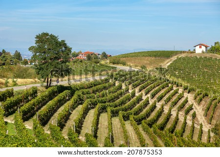 Tree on narrow rural road and green vineyards on the hills in Piedmont, Northern Italy. - stock photo