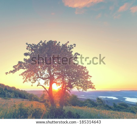 tree on summer meadow at sunset,Crimean mountains - stock photo