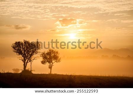 Tree on sunrise Savannah Field  - stock photo