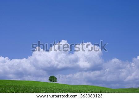 Tree on the green field  - stock photo