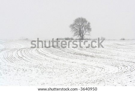 Tree on the horizon during the snowfall with the foreground of the elaborated patterns of maize stubble in the agricultural field. - stock photo