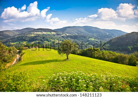 Tree on the midle of meadow , Divcibare mountain, Serbia.   - stock photo